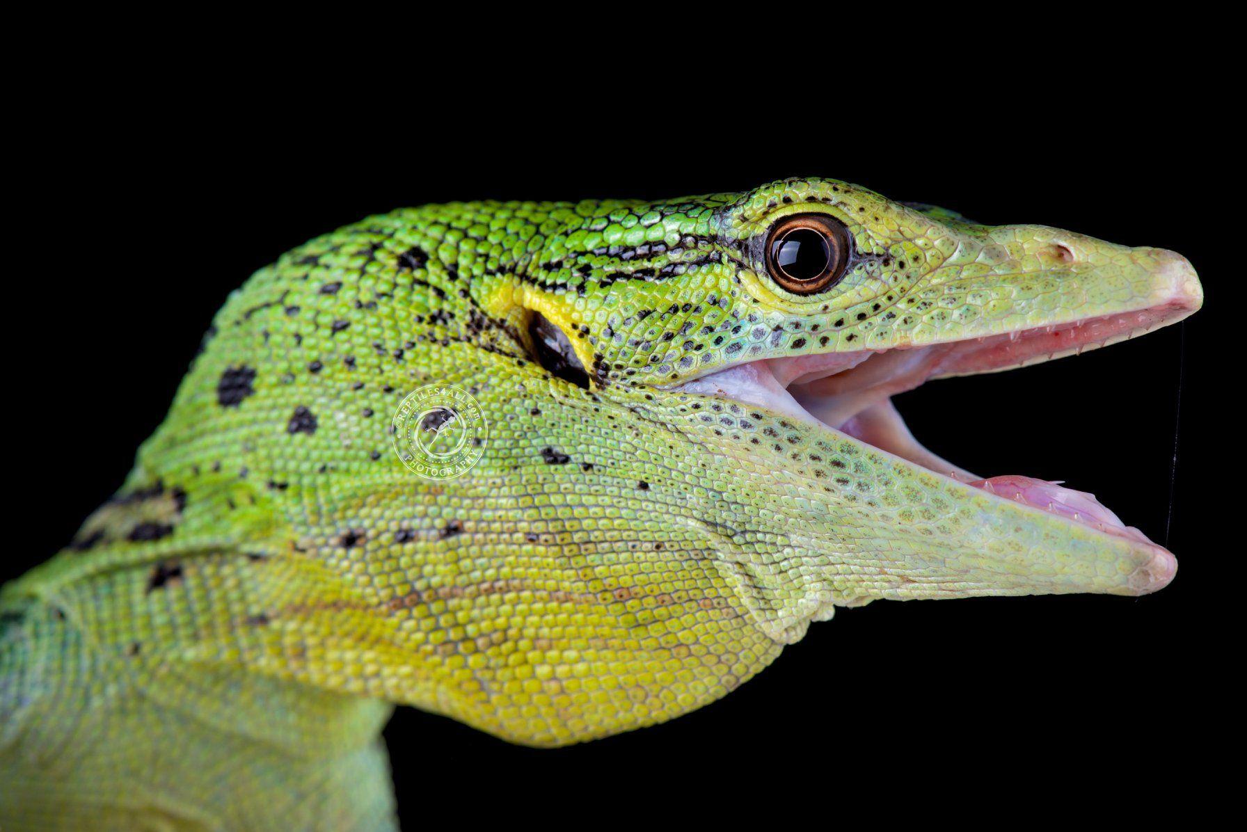 Idea By Alecks Matuszak On Reptiles