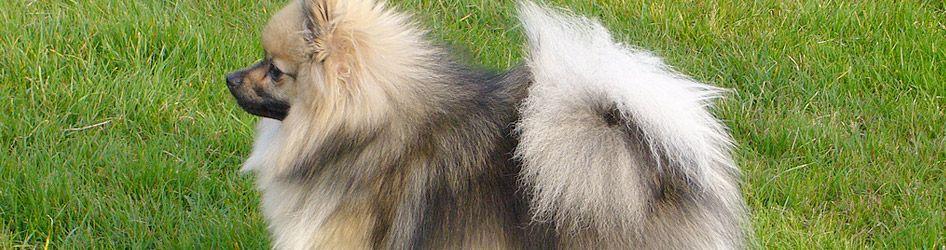 So So Smiling Here Jesse Springer Spaniel Beautiful Dogs I