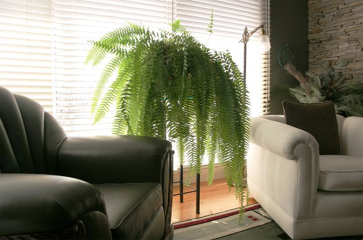 4 tips to make your ferns thrive indoors trending decor