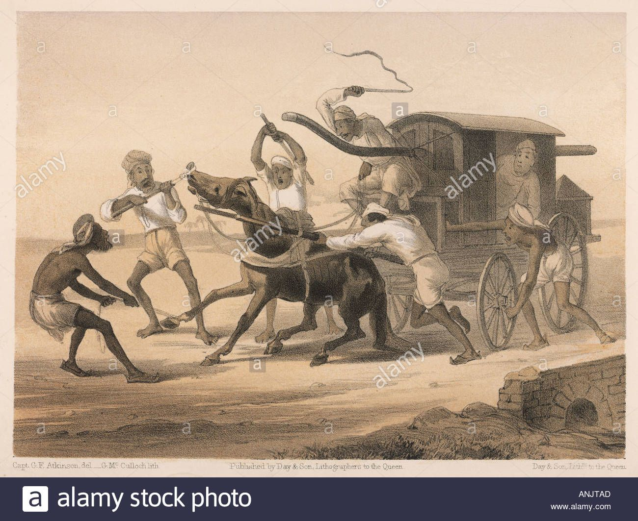 Curry Rice Horse Cart Stock Photo