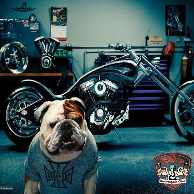 Good Morning Bikers Bulldog Biker Dog Very Cute Dogs