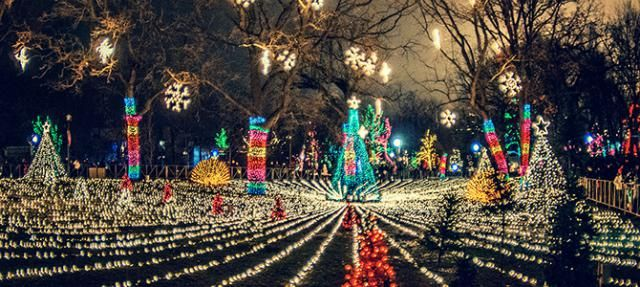 Visit Zoolights At Lincoln Park Zoo During Christmas In Chicago Lincoln Park Zoo Zoo Lights Chicago Fun