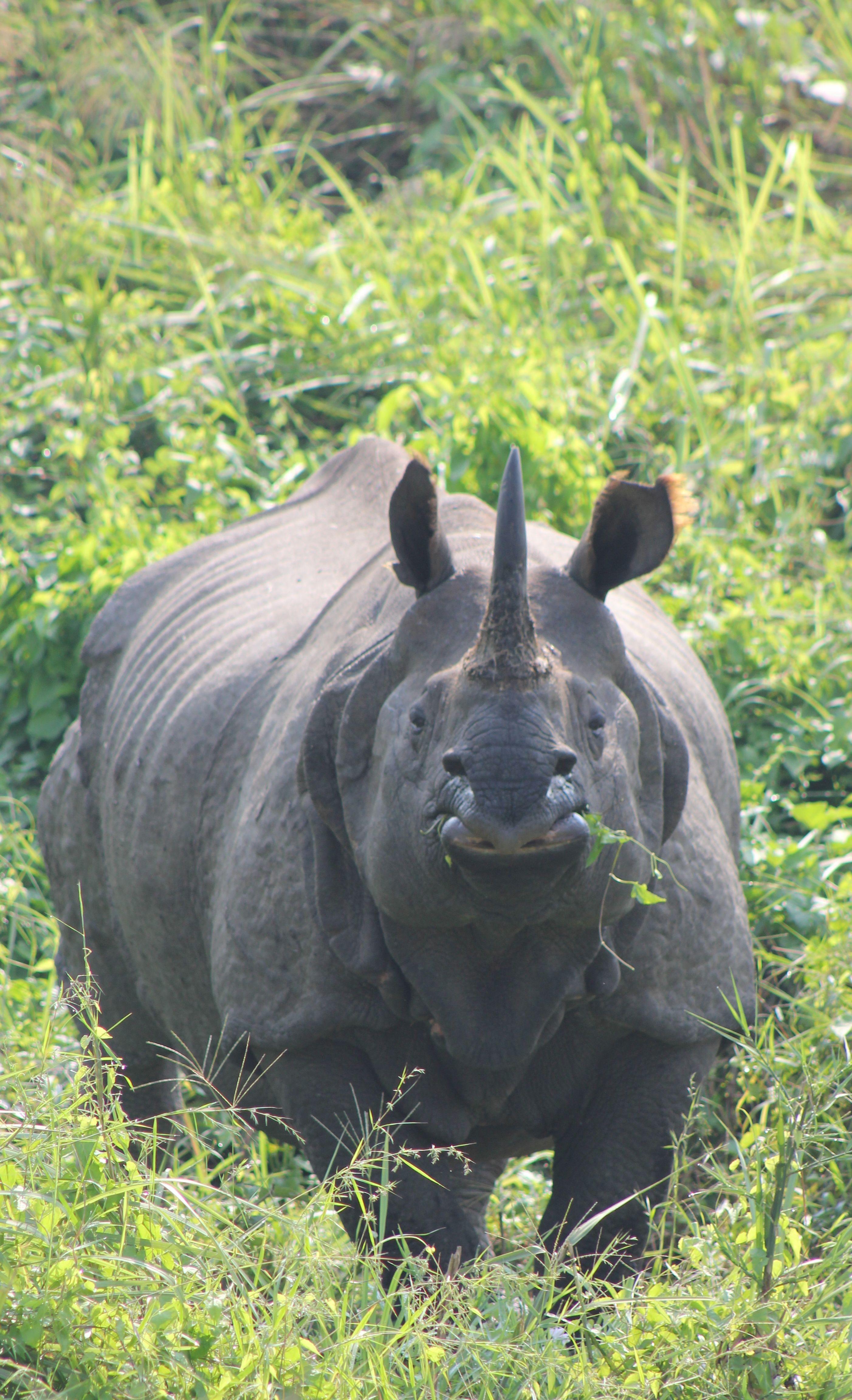 The Gap Year Blog Volunteer Journals Volunteer Photo Blog Rebecca Walters Travel Journal From Nepal Animals Big Animals Wildlife Animals