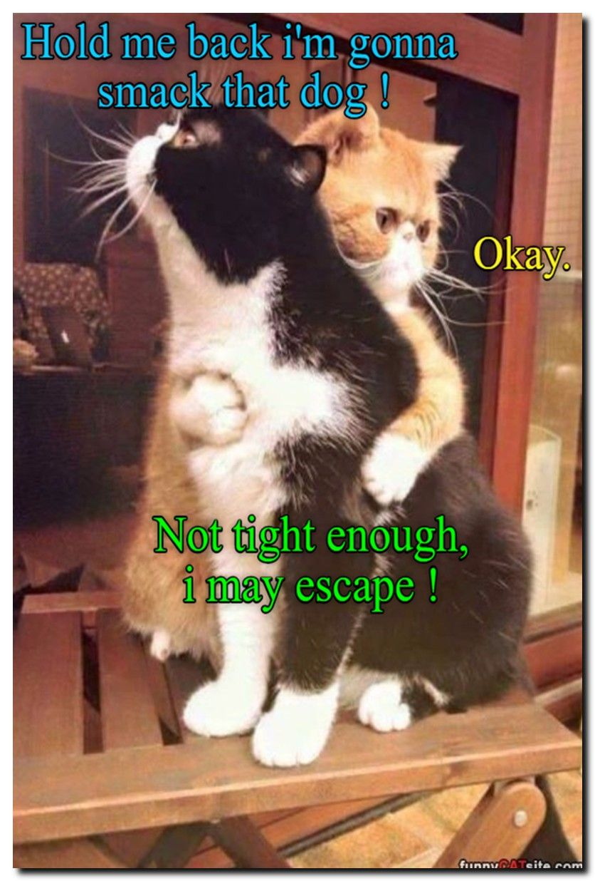 Fun Cat Facts for Kids. See 60 new funny pictures with