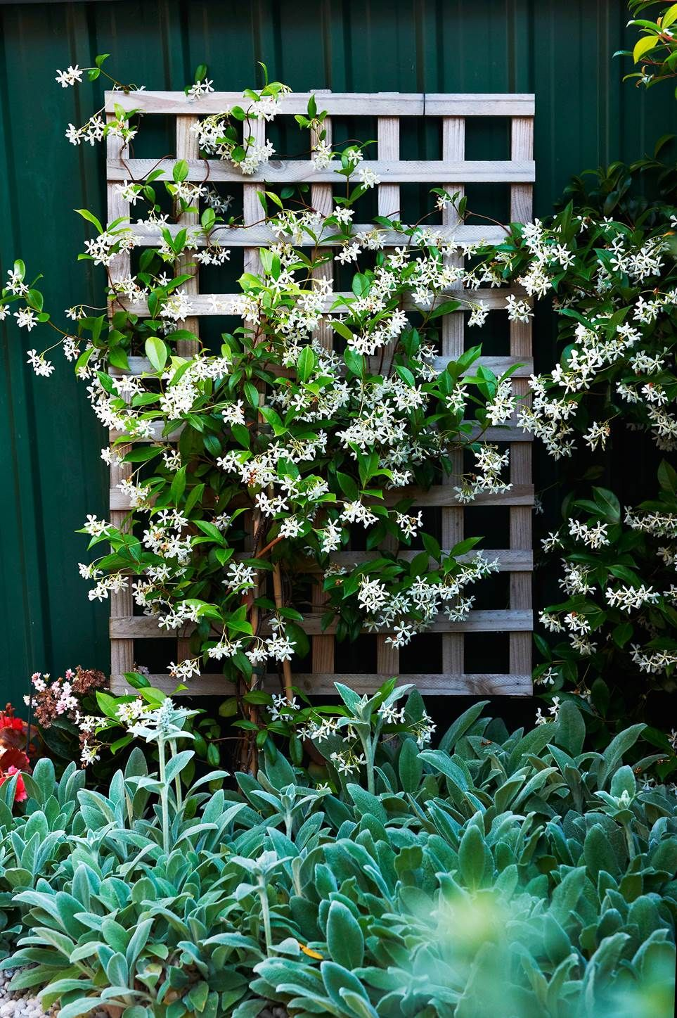 Climbing Plants 7 Fast Growing Climbers Vines And Creepers Climber Plants Diy Garden Trellis Climbing Flowers