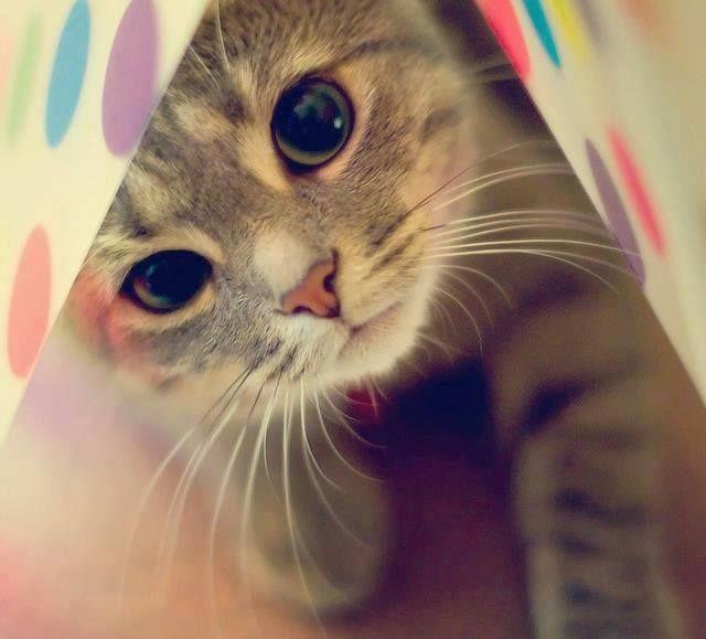 #gato #gatito #love #amor #ternura
