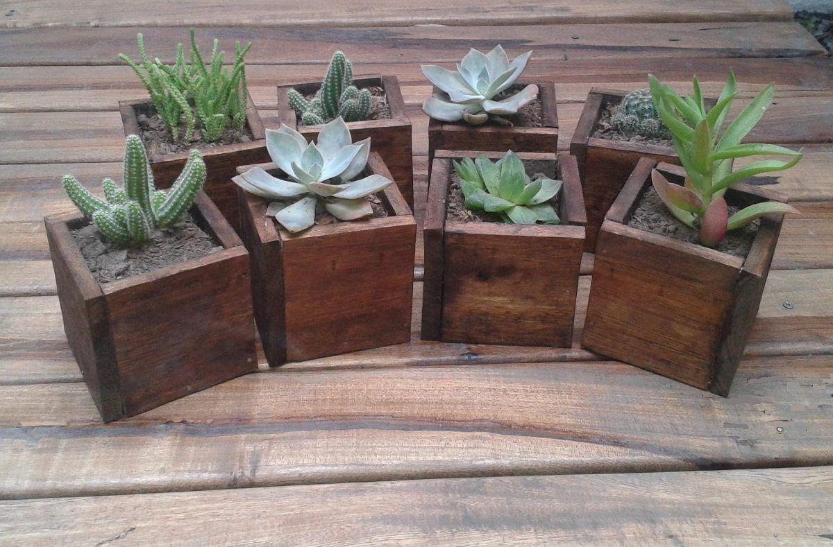 Pack x 5 cubitos con cactus suculentas centros de mesa - Macetas para centros de mesa ...