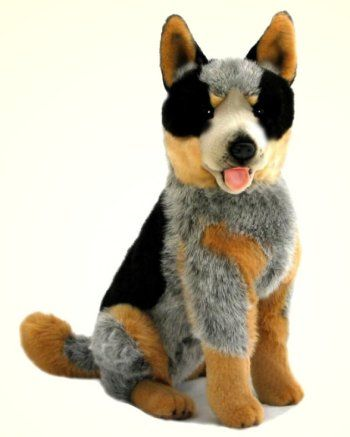 Rocky The Stuffed Australian Cattle Dog This And More Australian