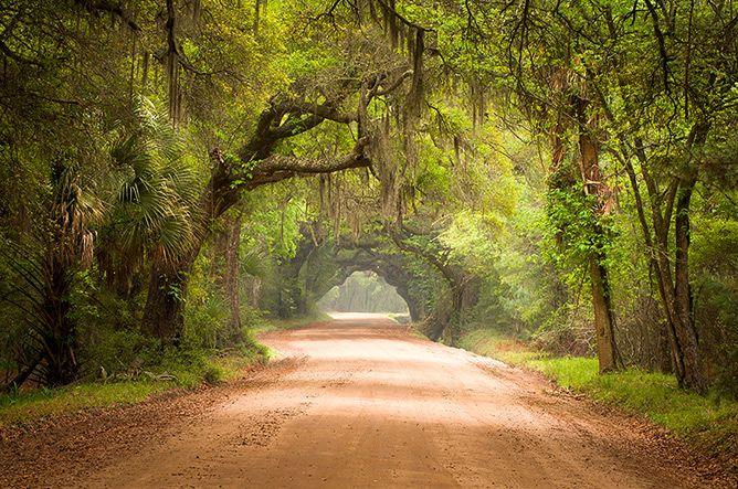 Ace Basin Dirt Road Botany Bay Edisto Island Charleston Sc Edisto Island Botany Bay Scenic