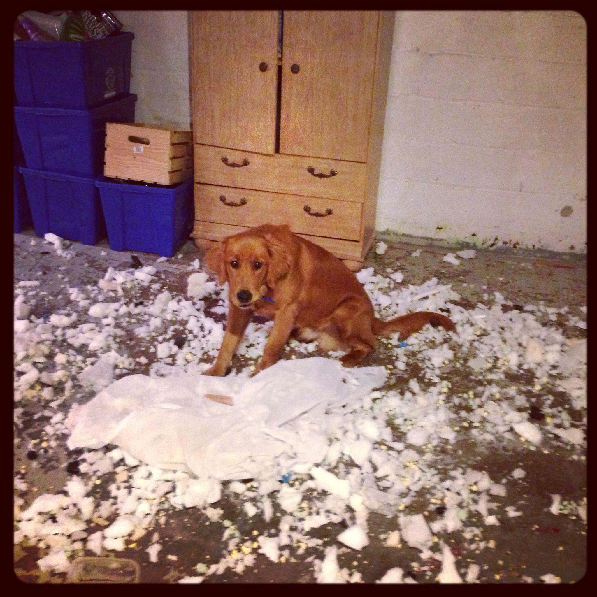 Busted!! ,destroy his new bed lol