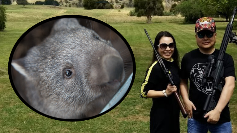 Petition Daniel Andrews Stop The Slaughter Of Wombats In Victoria Change Org Wombat Protected Species Petition