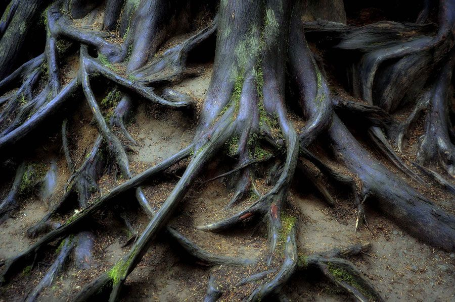 Tree Roots by Brian Riddell  Check out more incredible photos from our 2013 Photo Contest: http://www.outpostmagazine.com/gallery/9/
