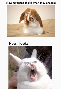 Funny animal/pets meme can make you laugh