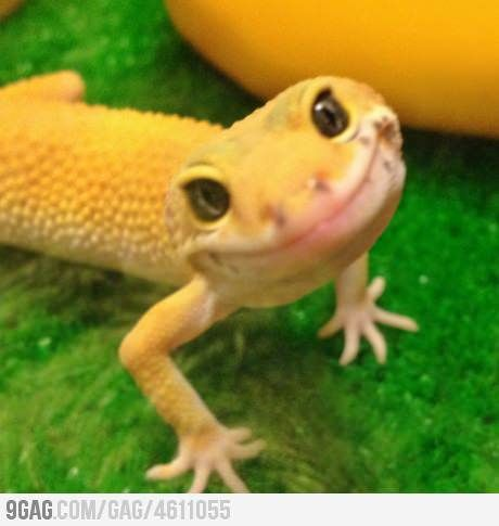 Rediculously Photogenic Lizard