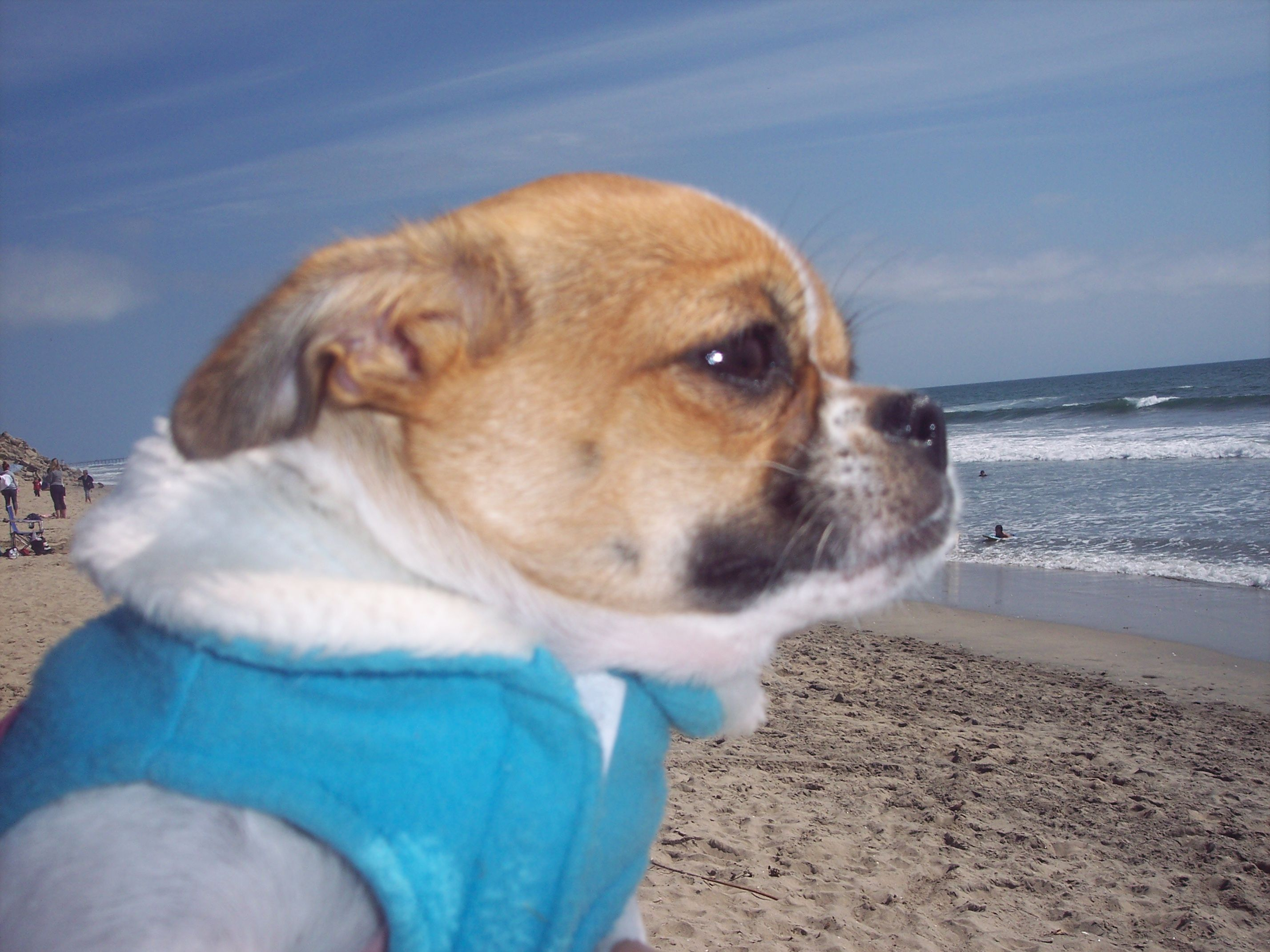 Lollipop S 1st Visit To The Beach Huntington Beach Dog Park