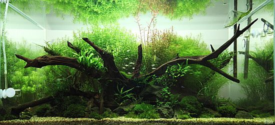 Working with driftwood aquarium aquascaping pinterest for How to work with driftwood