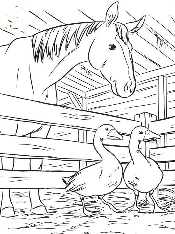 horse2.jpg (600×800)