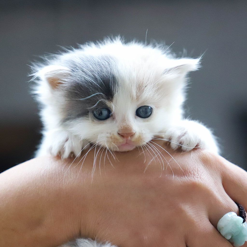 Sweet Images For Whatsapp Profile Pets Kittens Cutest Cats