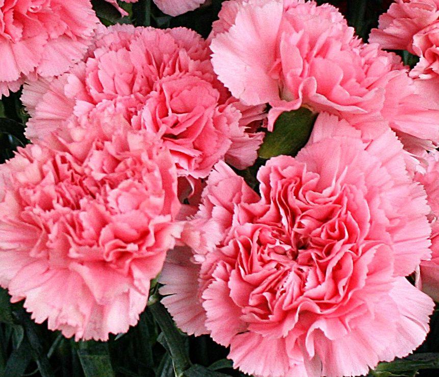 Pin On Floral Arrangements