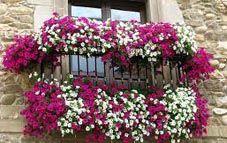 Balcon Con Flores Blog Pinturas Pinterest Blog Flowers And - Fotos-de-balcones-con-flores