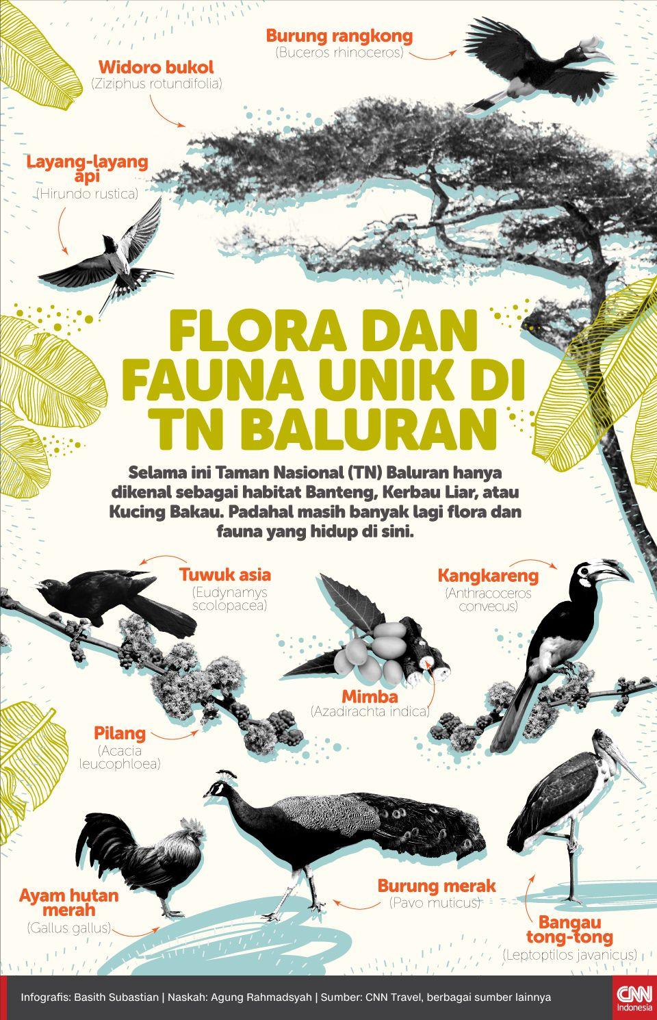 Flora Dan Fauna Unik Di Tn Baluran Flora Habitat Kucing