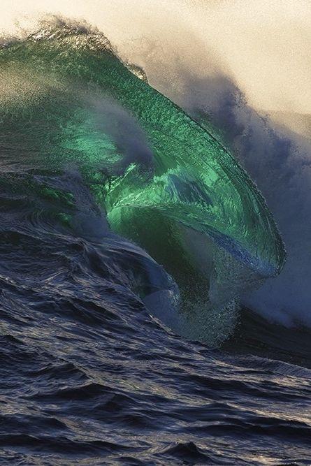 wavemotions:  Ocean MammalbyWilliam Patino