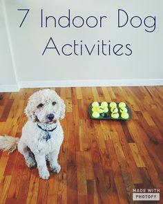 7 Indoor Dog Activities Dog Activities Indoor Dog Bored Dog