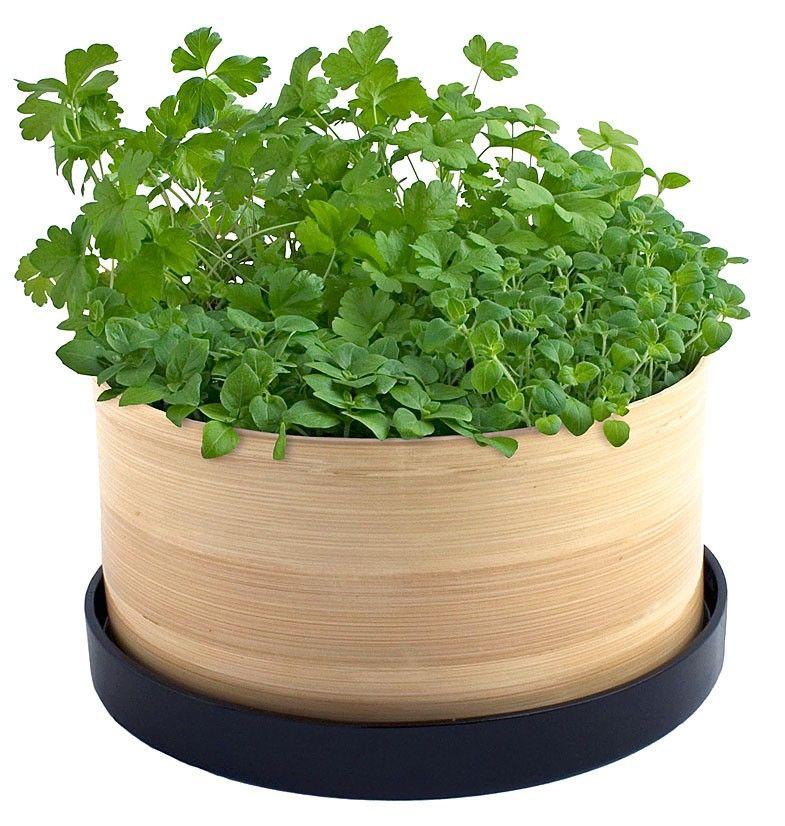 Marvelous Culinary Herb Garden