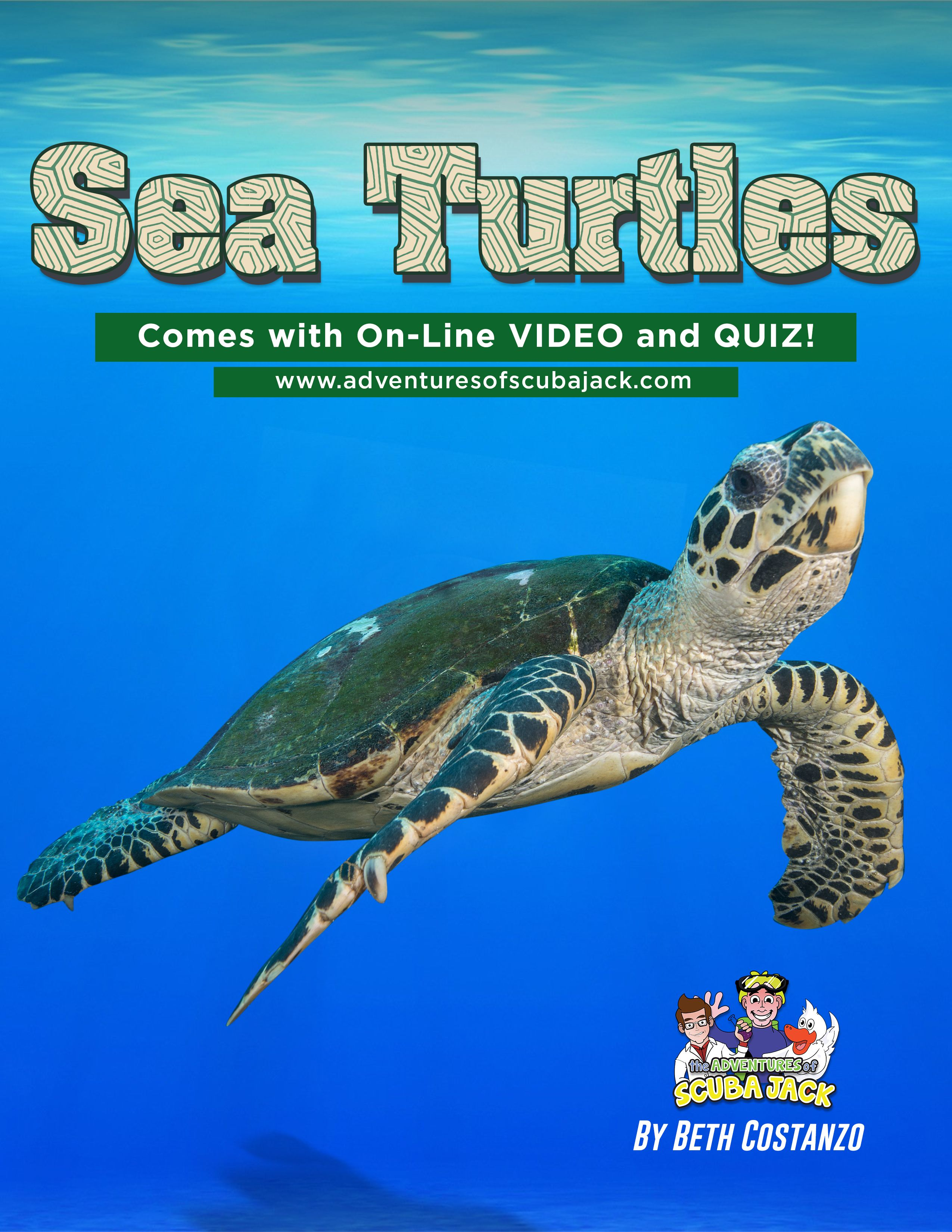 Sea Turtles Educational Booklet Video And Quiz In