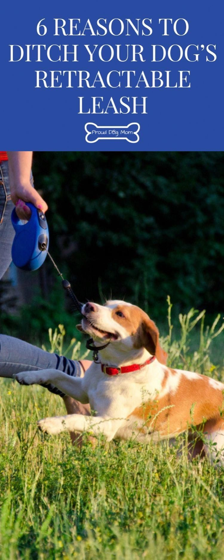 Get your puppy or dog to be obedient to you by using these