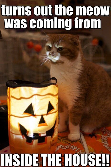 Kitten Tells A Scary Halloween Story With Images Scary Cat