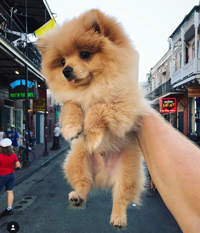 Kong Logan Paul S Dog