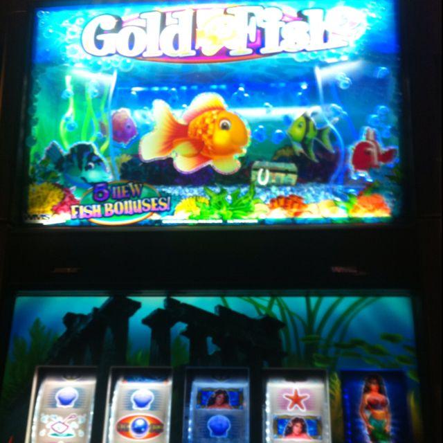 Fish slot machine video poker tutorial app