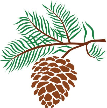 pine cone clip art vector images illustrations istock cookie rh pinterest com pine cone clip art free pinecone clip art