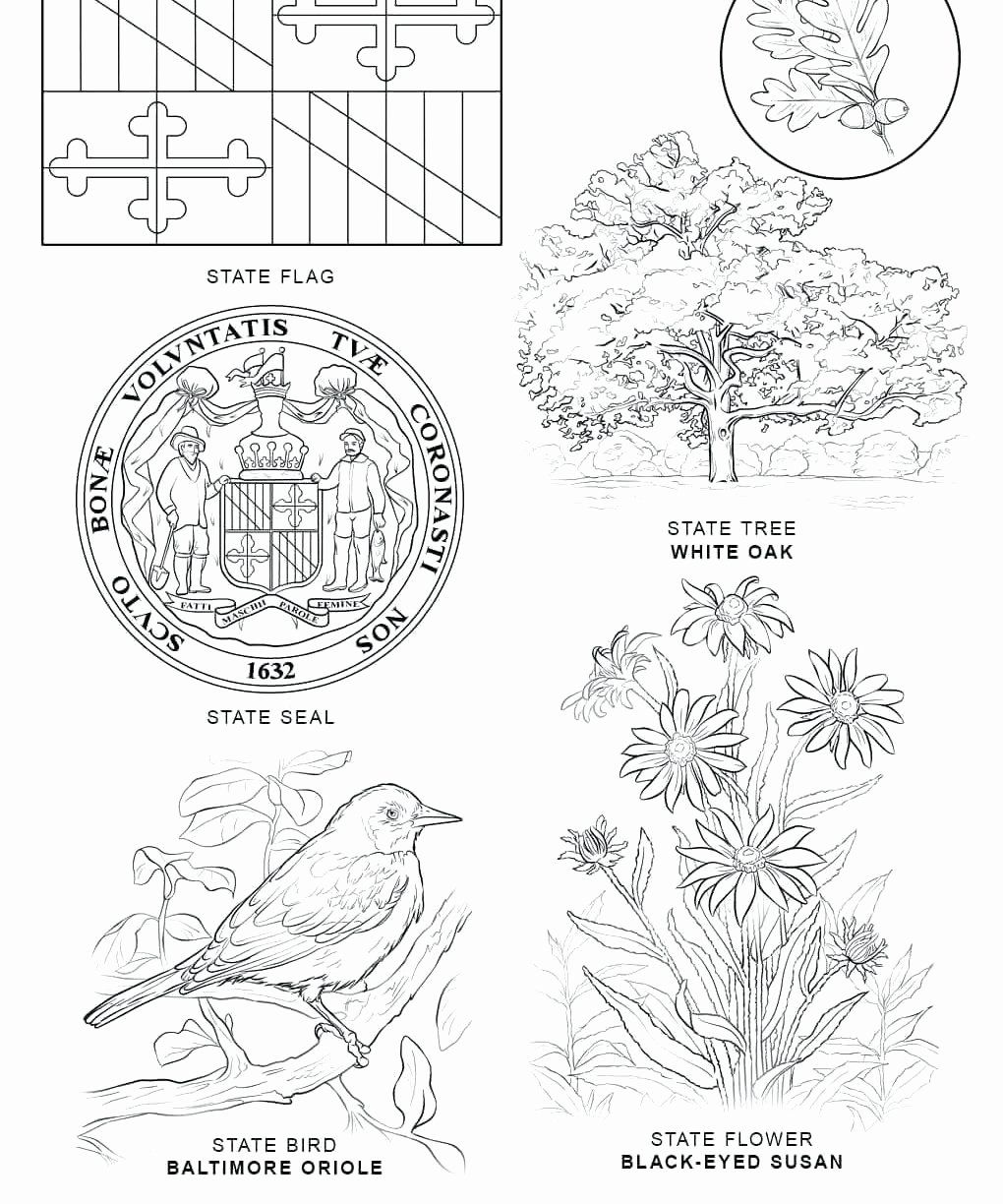 Alabama State Bird Coloring Page Unique Hawaii Flag Coloring Pages