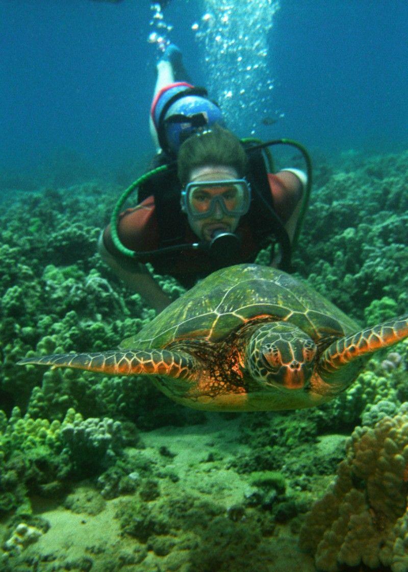 Scuba Diving in Hawaii  #hawaiianseaturtle #swimmingwithseaturtles #swimmingwithturtlesinhawaii