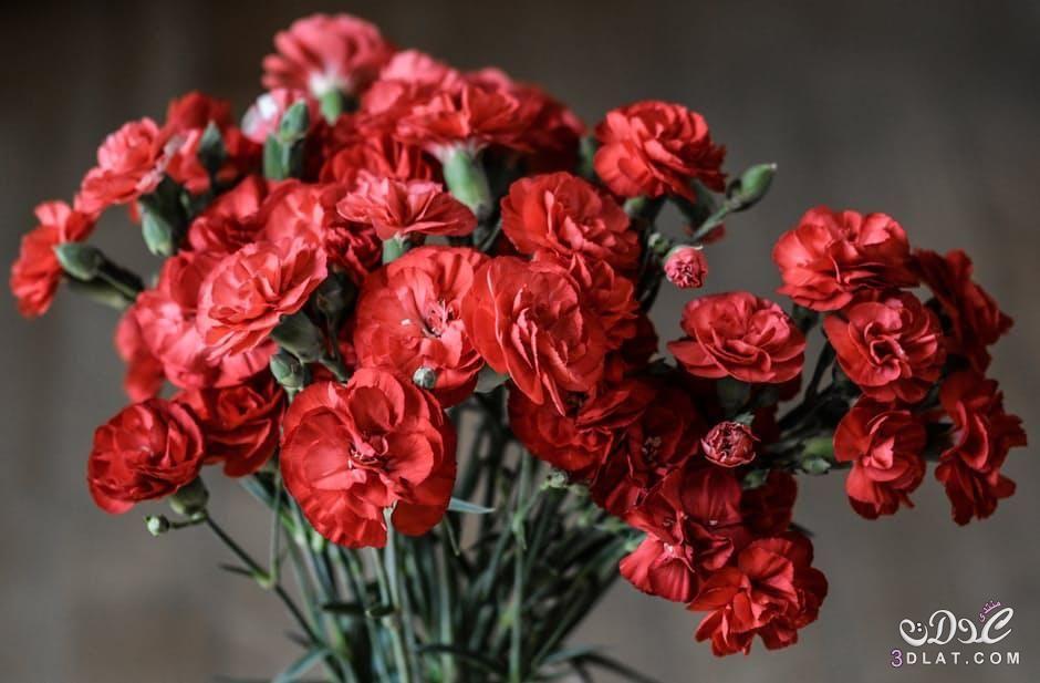 احلى ورود 2019 جوده عالية زهور 3dlat Net 26 17 C5d2 Flowers Night Blooming Flowers Home Improvement