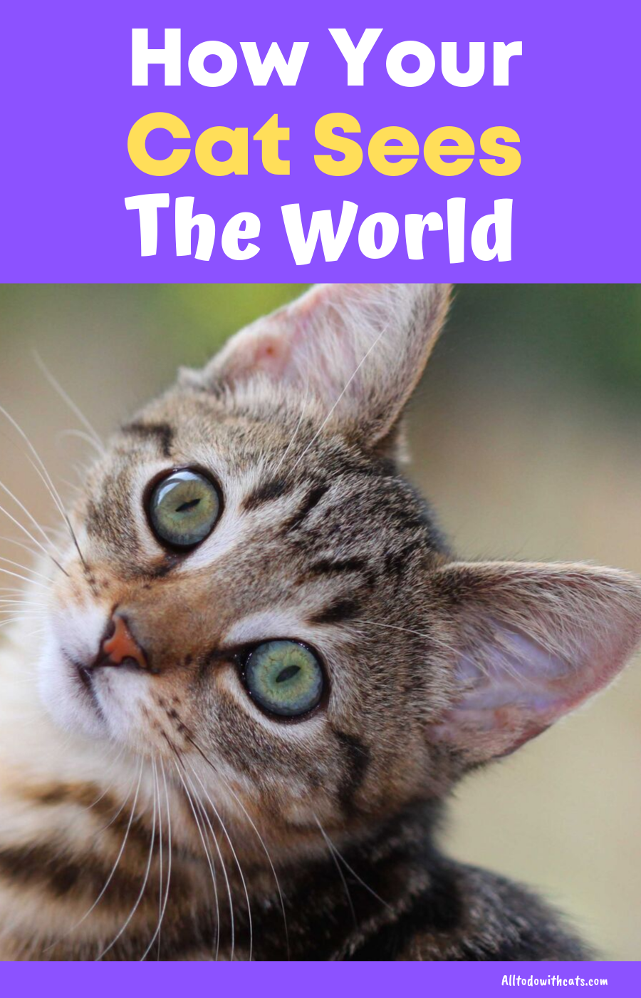 How Well Do Cats See What You Need To Know Cat Training Cats Cat Care