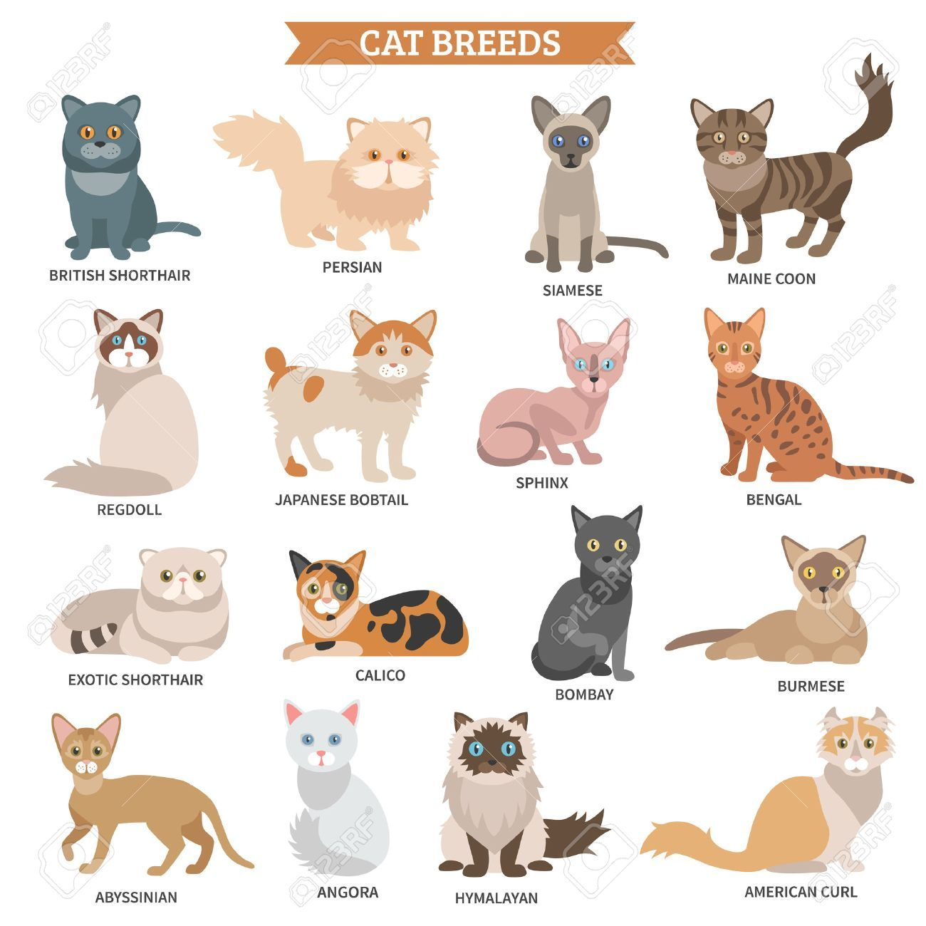 The following list of cat breeds includes only domestic