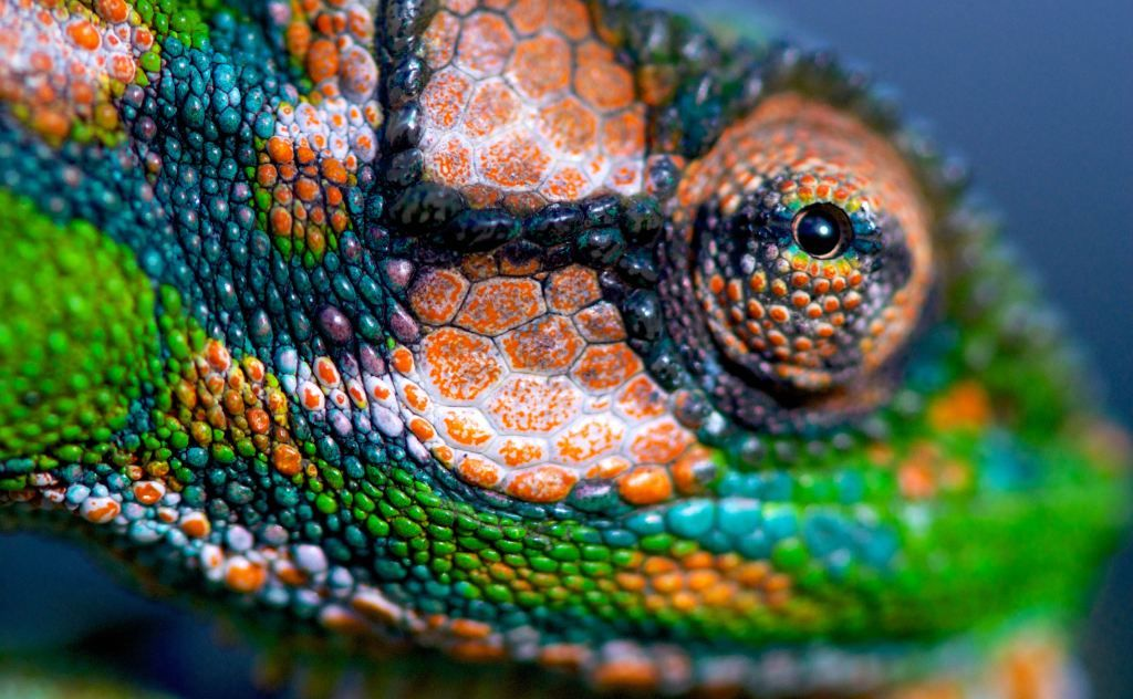 simply beautiful...,  by photographer David Rowley http://davrow.wordpress.com/