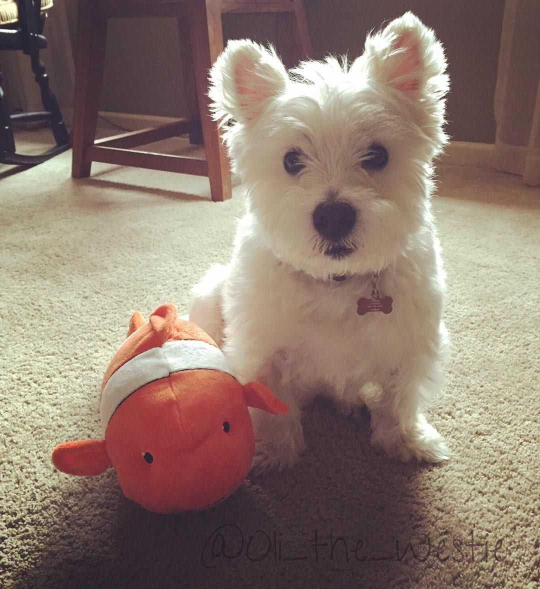 My Sis Got Me A New Fishy Toy To Celebrate Me Having 500
