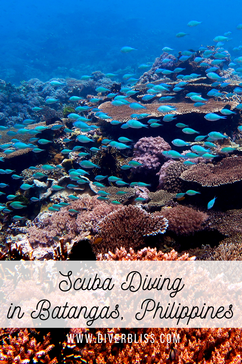 Scuba Diving Experience In Anilao Batangas Philippines Diver Bliss In 2020 Philippines Travel Guide Philippines Travel Scuba Diving