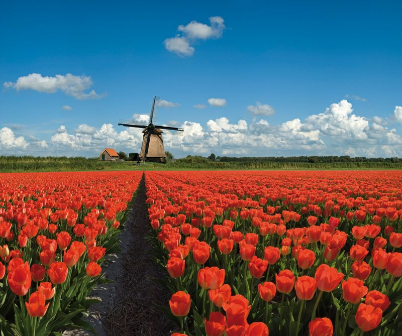 Netherlands countryside