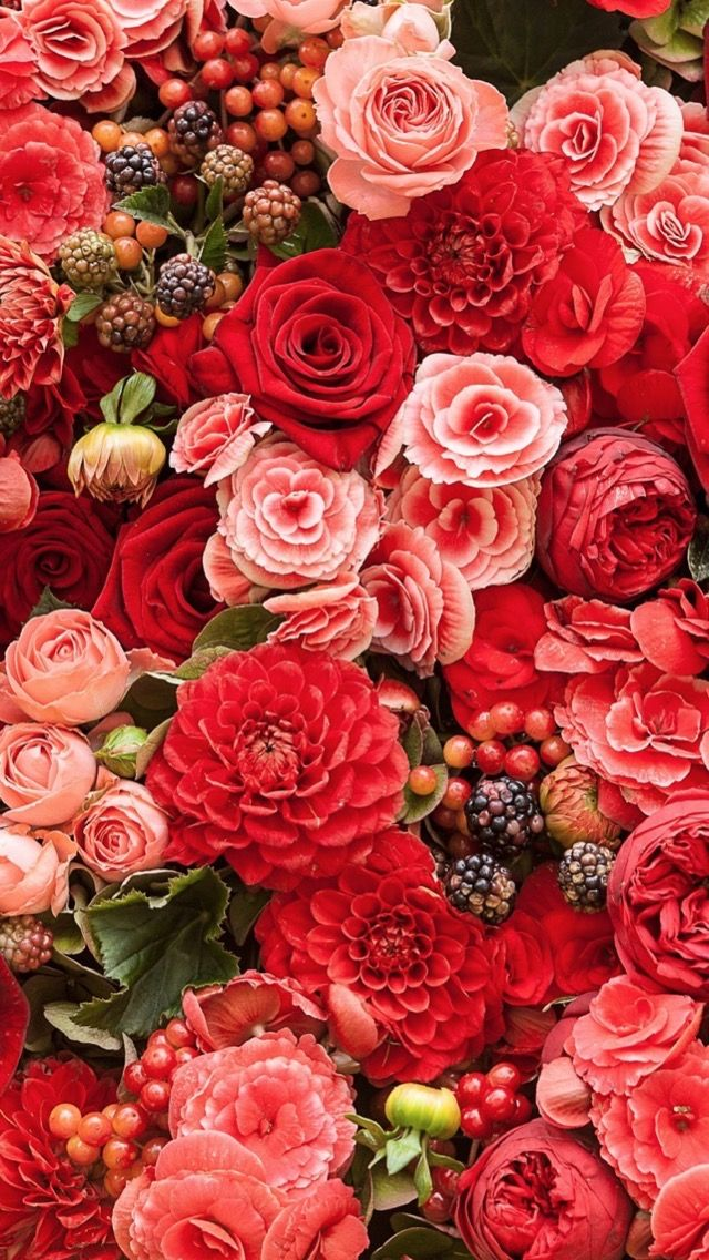 Iphone Wallpaper Flowers Red Flowers Flower Wallpaper Flowers