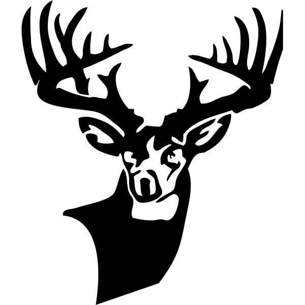 black and white bucks