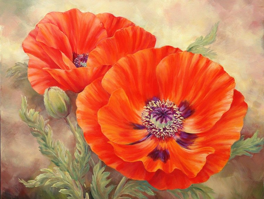 Poppies Today