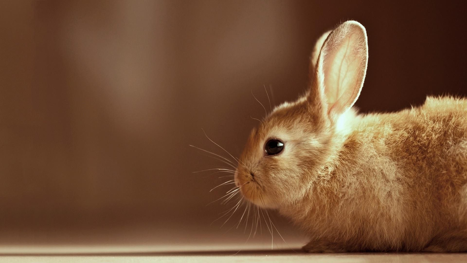 Happy Easter Cute Bunny Pictures Rabbit Wallpaper Cute Bunny