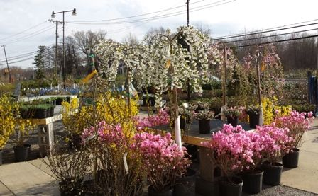 gales garden center willoughby hills of northeast ohio carries a variety of annuals perennials trees and shrubs - Gales Garden Center