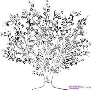 Cherry Blossom Tree Drawing Cherries Tree Coloring Page Tree