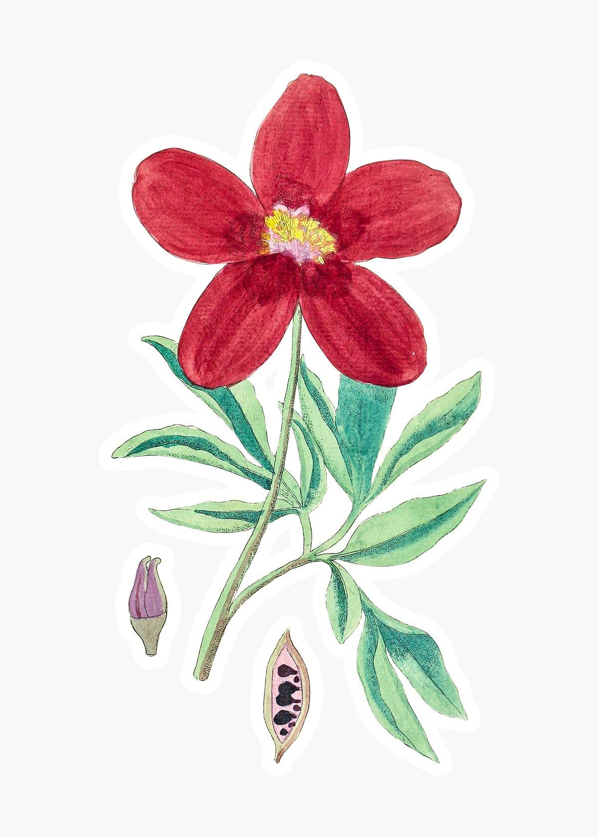 Pin on Botanical flowers